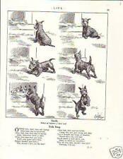 1925 Robert Dickey - Scottish Terrier's new family