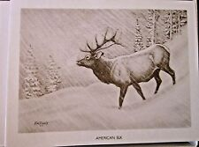 American Elk Boxed Note Cards with 10 Cards 10 Envelopes per Box