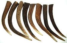 8 Large Natural Deer Antler for Knife Door handle production or Souvenir  #3724