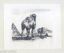"Stefano della Bella (1610–1664), Kamel-Camel, ""Diversi Animali"" 1641"