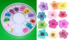 1 Caja-Rueda a fiori Secco Per decorazione di Unghie Nail Art Dry Flower Wheel