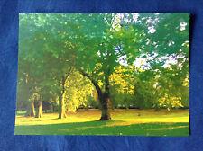 Autumn Trees - Lewisham Park Art Card