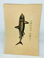 Original Antique Lacepede 1832 Hand Colored Plate 19 Great White Shark