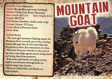 Mountain Goat, Rocky Mountains Mammal etc., Info - Animal Information Postcard