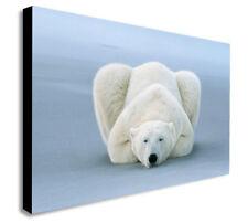 Polar Bear Sleeping - Canvas Wall Art Framed Print - Various sizes