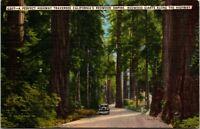 Vtg 1930's Redwood Trees Empire, Giant Trees California CA Postcard