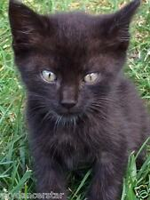SPONSOR RESCUED KITTEN FELIX FERAL CAT RESCUE FOOD VET Rec his COLOR PHOTO