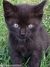 SPONSOR RESCUED KITTEN FELIX FERAL CAT RESCUE FOOD VET Rec his COLOR PHOTO