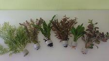 5 Bund XXL Kombi Bundpflanzen Aquariumpflanzen Wasserpflanzen Aquarium 2,50€/Stk