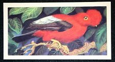 ANDEAN COCK OF THE ROCK  Superb Colour Card # CAT A
