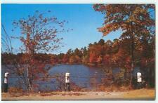 BROWNS MILLS NEW JERSEY NJ LITTLE PINE LAKE BY JOE SAPP 1960s POSTCARD 22621