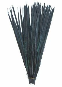 "English Ringneck PHEASANT Tail Natural Feathers 10-100 Pcs MANY SIZES 6-26"" New!"