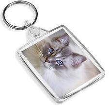 Magnifique poupée de chiffon Cat Porte-clés-IP02-Feline Friendly Fun Cool Cadeau #16863