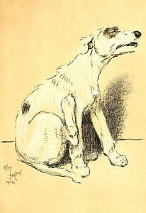 Framed Cecil Aldin Print – Lurcher Dog circa 1902 (Antique Animal Picture Art)