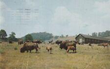 "*Pennsylvania Postcard-""Scene @ Trexler-Lehigh County Game Preserve"" /(PM 1958)"