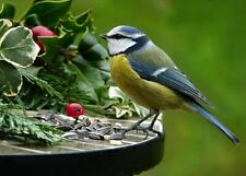 Blue Tit Charity Christmas Cards Pack 10 FREE P&P