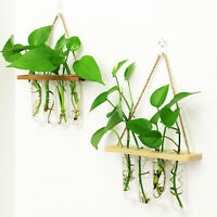 4 Glass Tubes Hanging Hydroponic Vase Flower Planter Glass Tube Plant Decoration