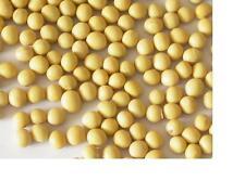 SEMI di soia pesante ritaglio sano superbean adatto per la cultura del Regno Unito 50 semi