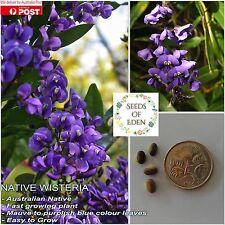 10 WISTERIA SEEDS (Hardenbergia comptoniana); Australian native