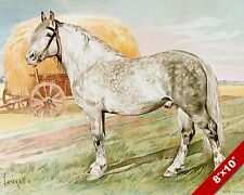 SPOTTED WHITE FARM WORK HORSE ART PAINTING REAL CANVAS PRINT