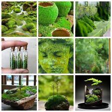 Various Aquatic Plants/Moss/Bonsai Types Mixed seeds 200 seeds each