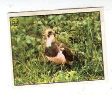 FIGURINA  FERRERO  EUROREGALO    NR  23  IL  MONDO  DEGLI  ANIMALI  RECUPERATA