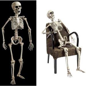 160 cm Skelett Lebensgroß beweglich Lehrmodell / Anatomie / Halloween Deko #600