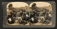 KEYSTONE STEREOVIEW WWI MILITARY BAKING BREAD FOR FIGHTERS IN THE TRENCHES