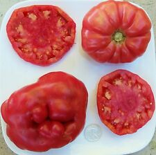 Watermelon - Organic Heirloom Tomato Seeds - Huge, Huge Beefsteak - 40 Seeds