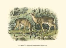 Virginian Deer Art Poster Print by John James Audubon, 13x9.5
