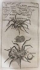 1745 Dissertation Tarantulas Dancing Mania -Hemorrhoids George Baglivi Medical