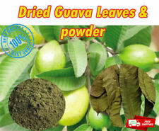 Guava Leave Powder and Dry Leaves