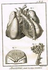 Diderot's Enclyclopedie - ANATOMIE, DETAILS DES ARTERES DE LA POITRINE - c1750