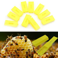 10Pcs Plastic Queen Bee Butler Cage Catcher Trap Case Beekeeping Tool