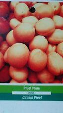 PLUOT / PLUMCOT Fruit Tree Healthy Plum Apricot Trees Natural Plant Home Garden