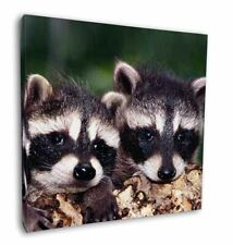 """Cute Baby Racoons 12""""x12"""" Wall Art Canvas Decor, Picture Print, ARL-3-C12"""