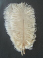 "10 IVORY OSTRICH FEATHERS 13-15""L"