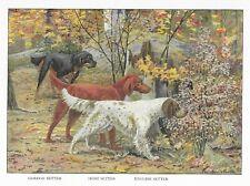 Gordon / Irish / English Setter - 1927 Color Dog Art Print - Matted