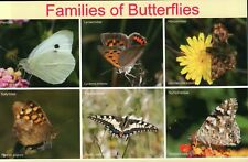 6 Families of Butterflies, Butterfly Flower Insect Lepidoptera - Animal Postcard