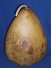 "11 1/2"" TALL DRIED/CLEANED CRAFT READY GOURD"
