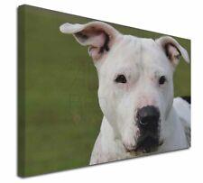 "American Staffordshire Bull Terrier Dog 30""x20"" Wall Art Canvas, , AD-SBT5-C3020"