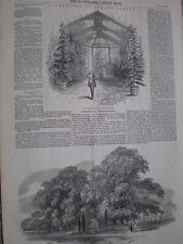 Sketches Strathfieldsay conservatory & grave of Copenhagen horse 1852 old prints