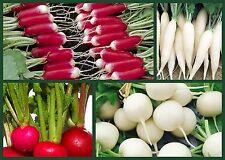Radish Seeds, Ravishing Radishes 4 Pk Special, Heirloom Non-Gmo Radish Seeds