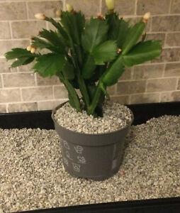 3-5mm Grey Quartz Gravel Stone Dressing To Bonsai Pot Topper Cactus Succulent