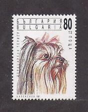 Dog Art Head Study Portrait Postage Stamp Yorkshire Terrier Bulgaria 1991 Mnh
