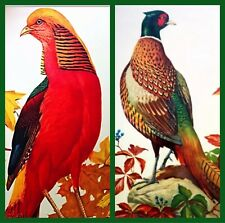 Two Vintage Roger Tory Peterson Lithographs Golden & Ring-Necked Pheasants +