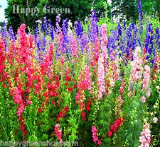 """Giant Larkspur mix up to 47"""" - delphinium pro - 300 graines-fleur"""