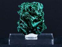 1.5 IN Bright Malachite Fibrous Velvet Crystal Specimen Congo 0.9 OZ Free Stand