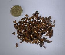 Nikko abeto, Abies homolepis, árbol de Navidad, perenne, Bonsai, 100 semillas