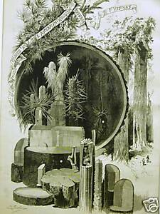 JESUP COLLECTION NATURAL WOODS FORESTRY BOTANICALS 1885 Antique Art Print Matted